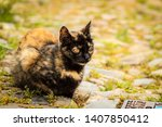 cute cat in a street | Shutterstock . vector #1407850412