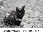 cute cat in a street | Shutterstock . vector #1407850415