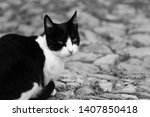 cute cat in a street | Shutterstock . vector #1407850418