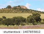 field with cork oak trees in... | Shutterstock . vector #1407855812