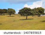 field with cork oak trees in... | Shutterstock . vector #1407855815
