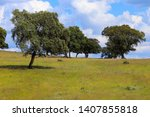 field with cork oak trees in... | Shutterstock . vector #1407855818