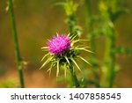 flowering spear thistle ... | Shutterstock . vector #1407858545