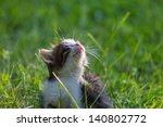 Stock photo little kitten 140802772