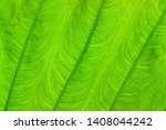 green leaf texture with... | Shutterstock . vector #1408044242