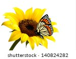 Nature Summer Sunflower With...