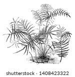 a picture of gleichenia... | Shutterstock .eps vector #1408423322