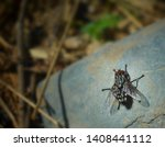 Black fly sitting on stone in...