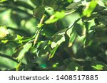 green leaves of a tree | Shutterstock . vector #1408517885