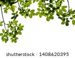 green tree branch isolated on... | Shutterstock . vector #1408620395