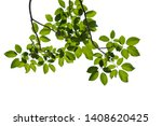 green tree branch isolated on... | Shutterstock . vector #1408620425