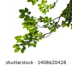 green tree branch isolated on... | Shutterstock . vector #1408620428