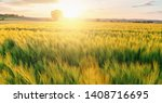 Fresh Wheat Flied With Tree At...