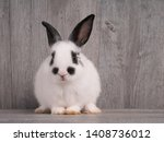Stock photo black and white cute rabbit on wood table white and black dot on face rabbit funny rabbit 1408736012