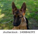 cute puppy of german sheperd...   Shutterstock . vector #1408846595