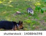 cute puppy of german sheperd...   Shutterstock . vector #1408846598