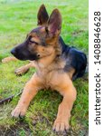 cute puppy of german sheperd...   Shutterstock . vector #1408846628
