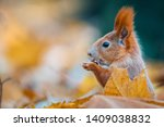 Portrait Of A Cute Red Squirrel ...