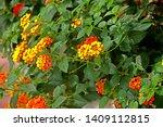 Orange Wild Flower In The Garden