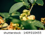 green leaves of a tree | Shutterstock . vector #1409310455