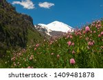 landscape with meadow of pink... | Shutterstock . vector #1409481878