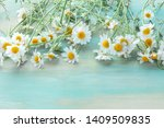 Blooming Chamomile Flowers On A ...