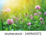 Field Of Clover Flowers