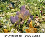 Small photo of Underwater life, Branching tube sponge Aiolochroia crassa, with suenson's brittle star and a damselfish, Caribbean sea