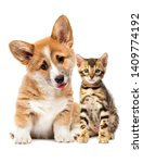 Stock photo puppy and kitten watching together 1409774192