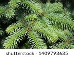 beautiful green tree in the... | Shutterstock . vector #1409793635