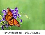 Viceroy Butterfly  Limenitis...