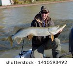 A hybrid tiger muskie fish being held horizontally on a boat by a smiling man kneeling on a boat on a freshwater river in autumn