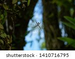 A Spider In Her Web In The...