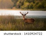 Wild Deer In A National Park