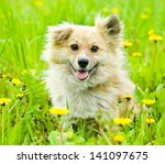 Happy Mixed Breed Dog In Flower ...