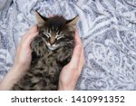 Stock photo a little kitten is sleeping on a gray plaid in the hands of a caucasian girl view from above 1410991352