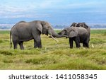 A family of elephants greeting each other in the grasslands of Amboseli in Kenya.