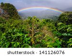 Coffee Plantation And Rainbow...
