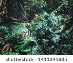 beautiful of green tropical... | Shutterstock . vector #1411345835
