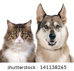 Stock photo close up portraits of dog and cat in front on white isolated background 141138265