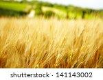 Agriculture Golden Background...