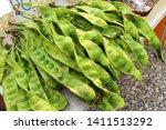 green stink bean of southern...   Shutterstock . vector #1411513292