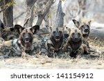 African Wild Dogs In Botswana'...