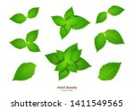 fresh mint on a white... | Shutterstock .eps vector #1411549565