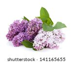 Lilac Branch. Isolated On Whit...