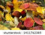 Mushrooms On A Background Of...