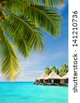 coconut palm tree leaves over...   Shutterstock . vector #141210736