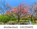 Double Flowered Cherry Blossom...