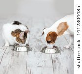 Stock photo dog and cat eats food from bowl 1412304485