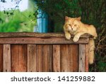 Red Cat Sitting On A Fence And...